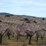 Almendros en Flor zona exterior mas el vilars